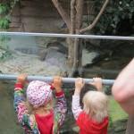 Krokodiller... - de er kedelige, de ligger stille...